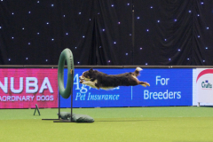 Jo and Pip - Novice Agility Finals at Crufts 2015