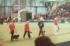 Good Citizens Demo at Crufts, 1993