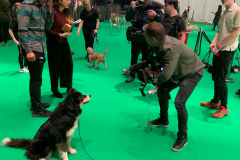Sonic being interviewed at Crufts 2020