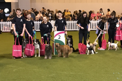 Junior Team - 2nd at Crufts 2017