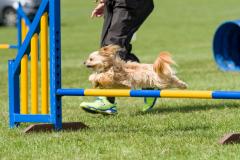 Pixel - Beginners Steeplechase 2017